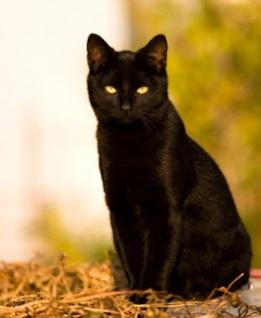 Mitos Kucing Hitam Dari Berbagai Negara [ www.BlogApaAja.com ]
